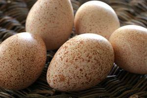 hindi yumurtası