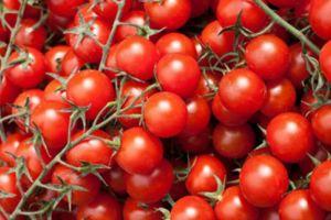 kiraz domates