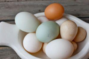 ordek-yumurtasi