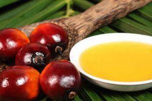 palm-yagi