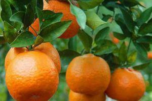 turunc