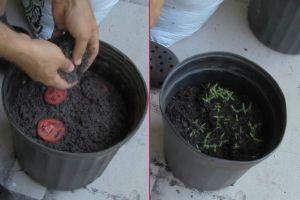 one-cikan-domates-yetistirmenin-en-kolay-yolu