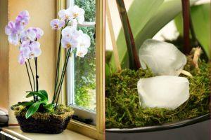 orkide-bakimi-one-cikan