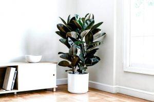 az-su-isteyen-bitkiler-2