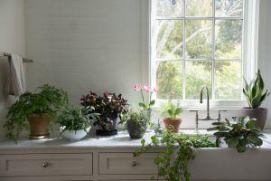 Siz Evden Uzaktayken Bitkileriniz Solmasın: Tatildeyken Evdeki Bitkiler Nasıl Sulanır?
