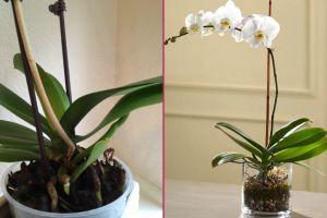 solan-orkide-nasil-canlandirilir-one-cikan