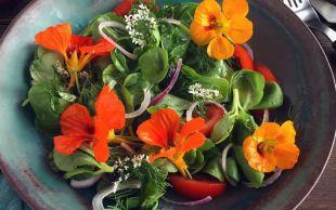 Yenebilir Çiçekli: Kırmızı Soğanlı Semizotu Salatası