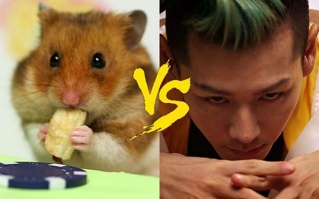 hamster-vs-kobayashi-durum-yeme