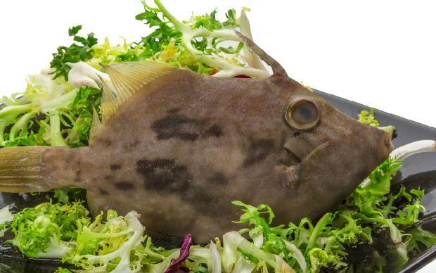 Dülger Balığı