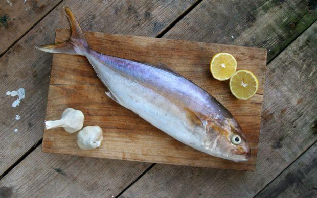 Akya Balığı