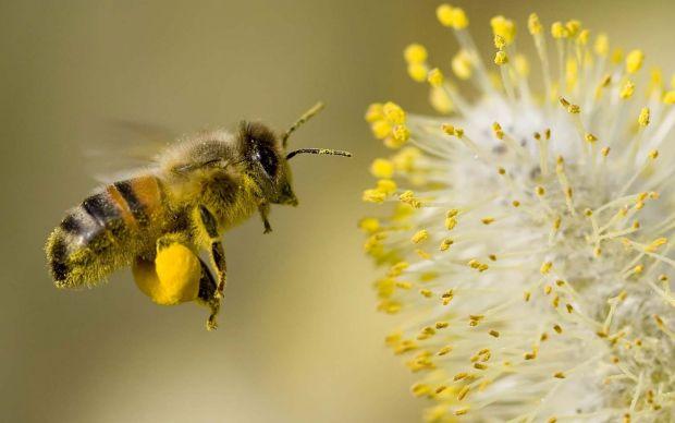http://windomallergy.com/pollen-pollen-everywhere/ | windomallergy
