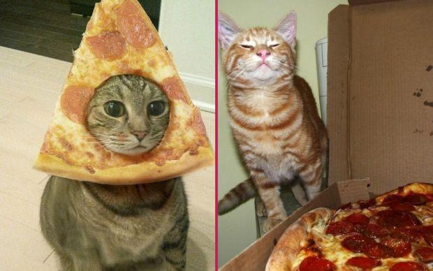 pizza-kedi-manset