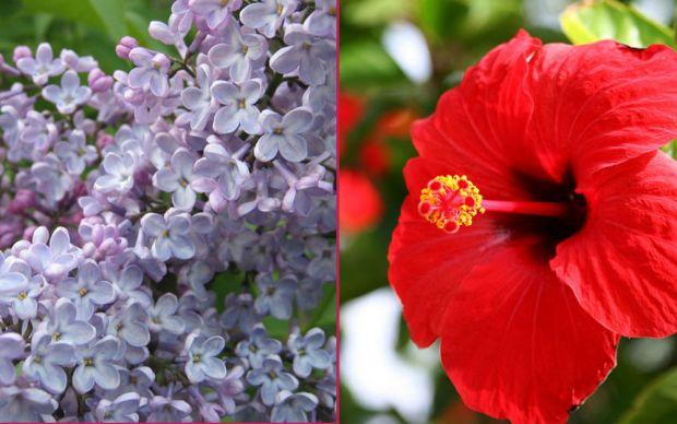 yenilebilir çiçekler
