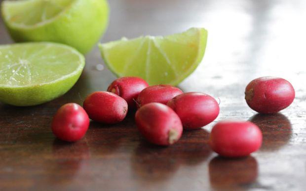 http://tasteofthetopend.com/tag/grow-fruit-darwin/    tasteofthetopend