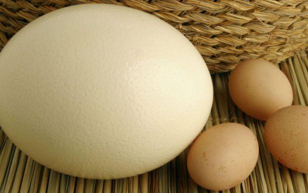 Devekuşu Yumurtası