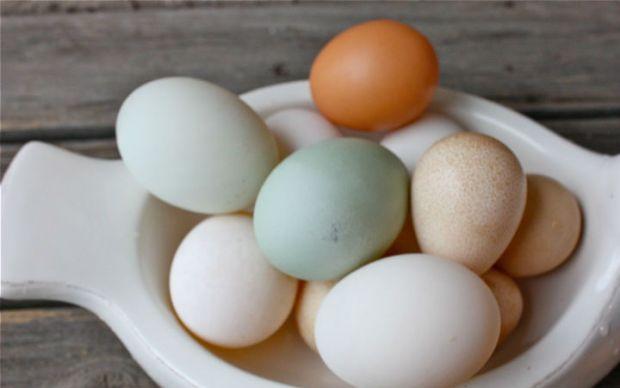 Ördek Yumurtası