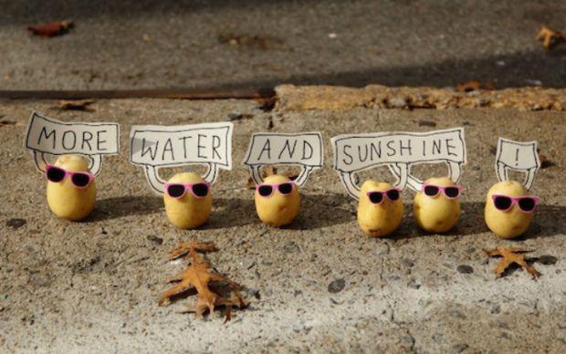 isyankar-patatesler
