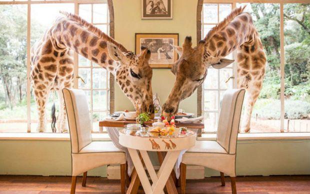 dunyanin-en-sira-disi-restoranlari