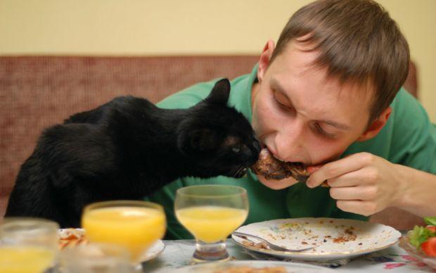 sira-beklemek-istemeyen-kedi-one-cikan