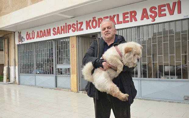 http://www.star.com.tr/yasam/sokak-kopekleri-icin-asevi-acti-haber-1197726/ | star