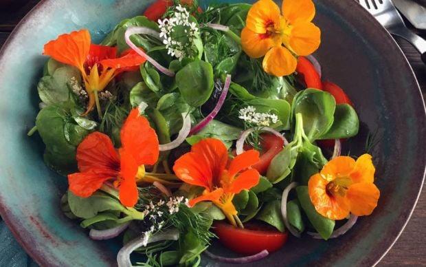 https://yemek.com/tarif/kirmizi-soganli-semizotu-salatasi/   Kırmızı Soğanlı Semizotu Salatası Tarifi