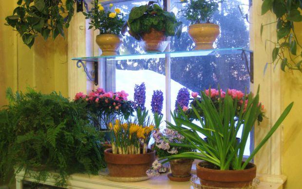 http://www.agardenforthehouse.com/2012/09/steps-to-a-beautiful-window-garden/ | agardenforthehouse