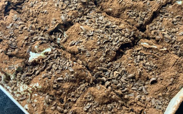 soguk-baklava-mertcan