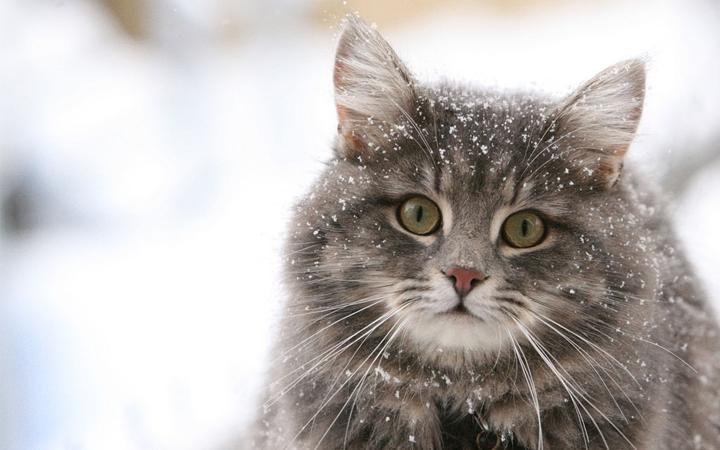 hippikiz - evde hazırlanabilir kedi ve köpek mamaları