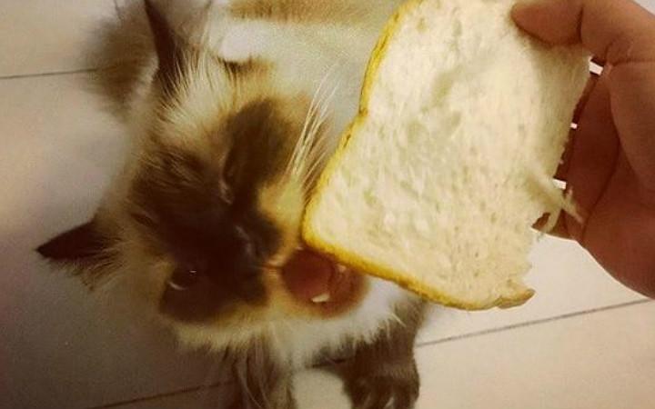 ekmek-manset