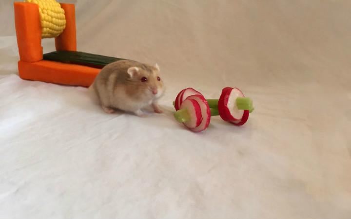 hamster-spor-salonu