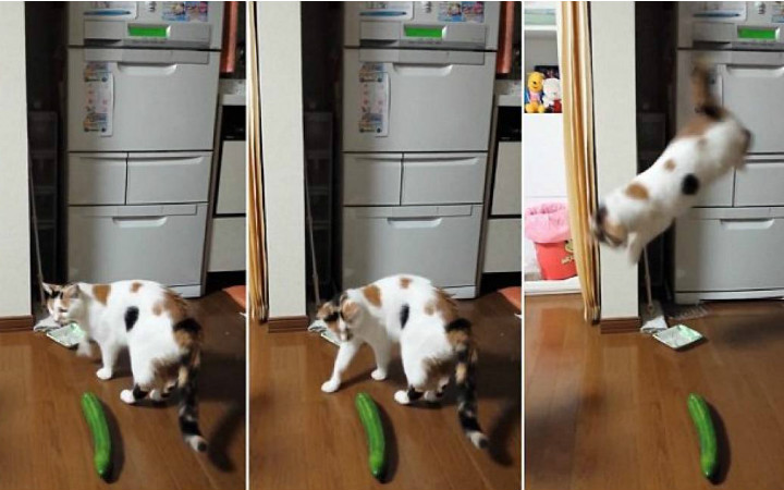 salatalik-kedi-manset