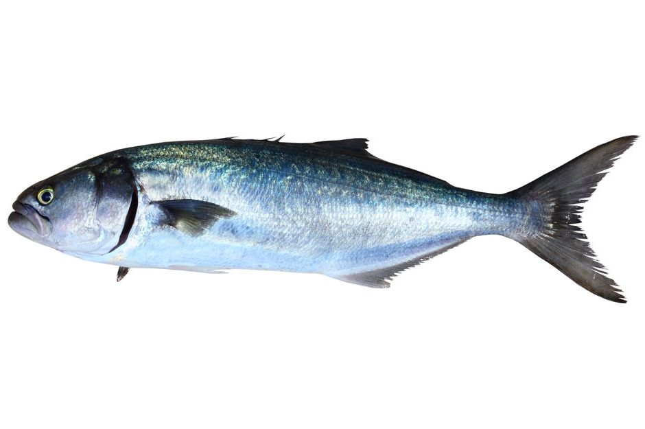 Hangi Balık Kaç Santimetre Avlanmalı?