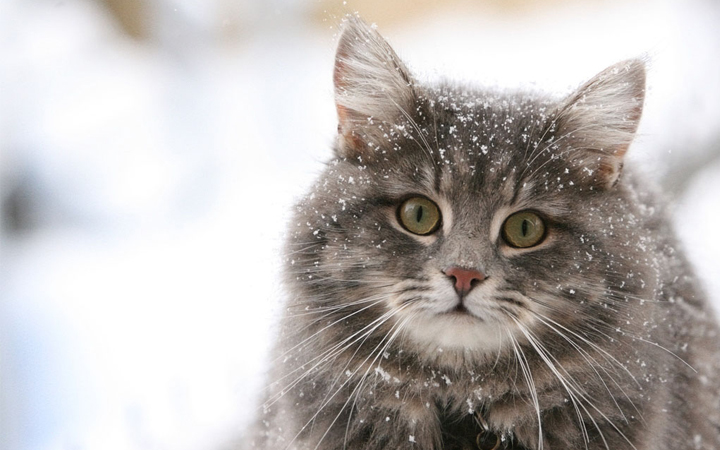 http://hippikiz.com/kurkumun-icine-bir-sey-giymedim-usuyorum/ | hippikiz - evde hazırlanabilir kedi ve köpek mamaları