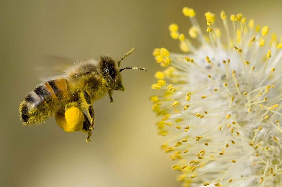 http://windomallergy.com/pollen-pollen-everywhere/   windomallergy