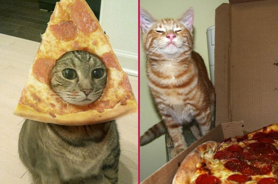 pizza-kedi-manset