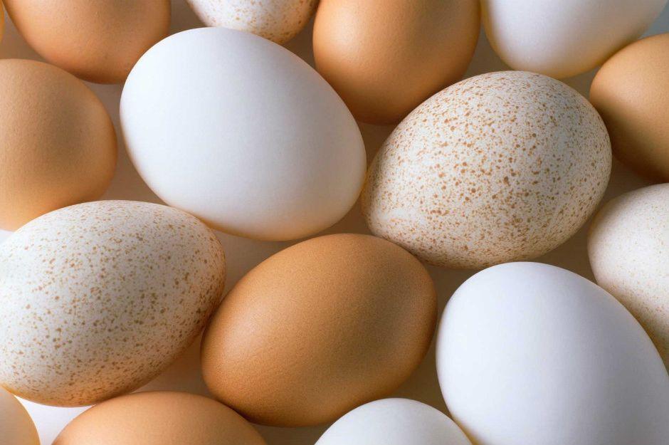 yumurtanin-icinden-cikan-yumurta-manset