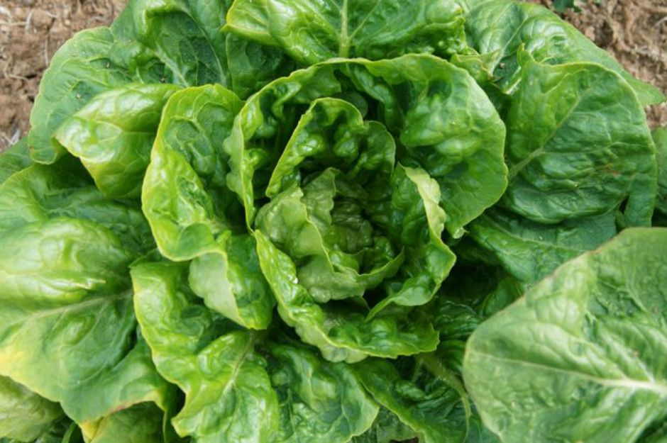 http://www.livestrong.com/article/512158-how-to-freeze-lettuce-leaves/ | livestrong