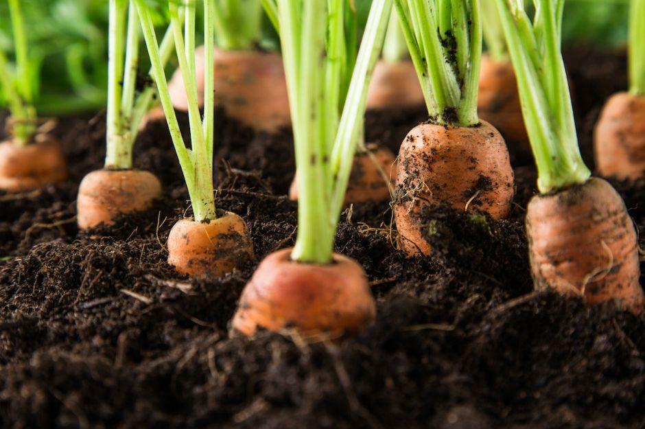 https://backyardriches.com/easy-vegetables-to-grow/ | backyardriches