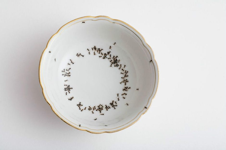 http://www.homeanddecor.com.sg/articles/95101-design-create-impression-your-guests-these-porcelain-crockery-ant-designs | homeanddecor