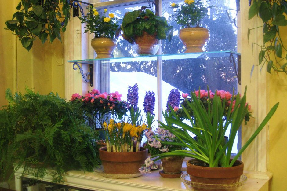http://www.agardenforthehouse.com/2012/09/steps-to-a-beautiful-window-garden/ | agardenforthehouse