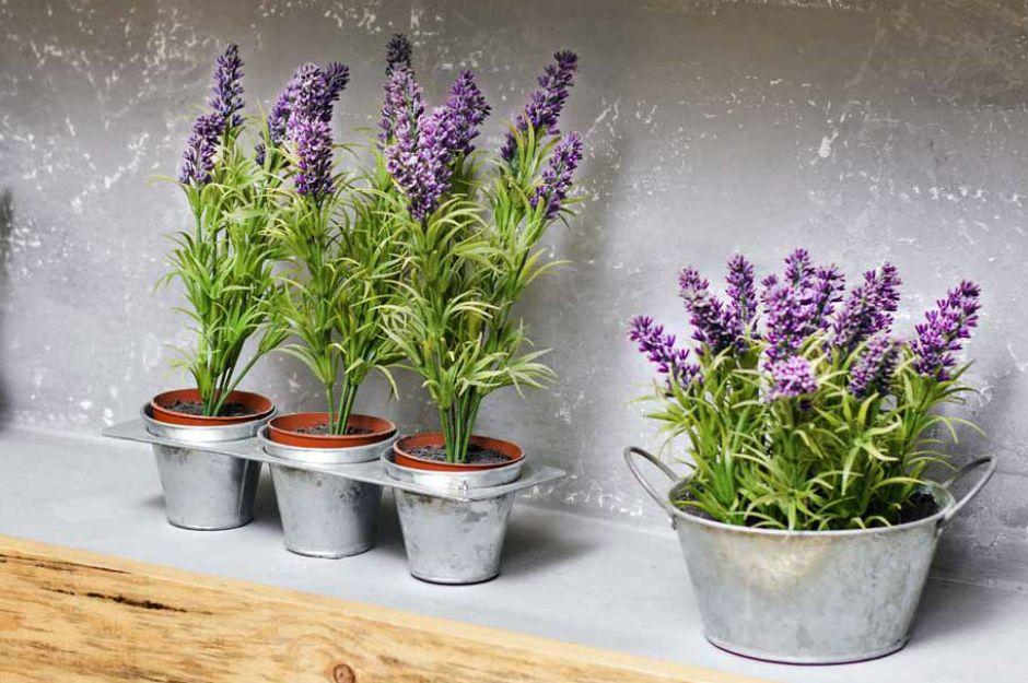 https://gardenerspath.com/plants/herbs/grow-lavender/ | gardenerspath