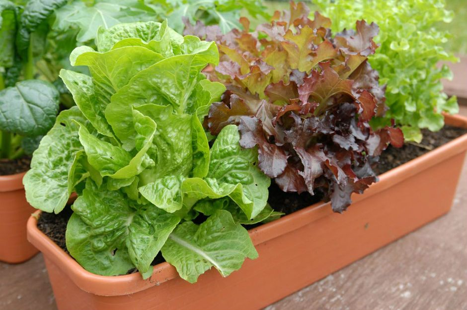 https://myperfectplants.com/2016/08/19/starting-fall-vegetable-garden/ | myperfectplants