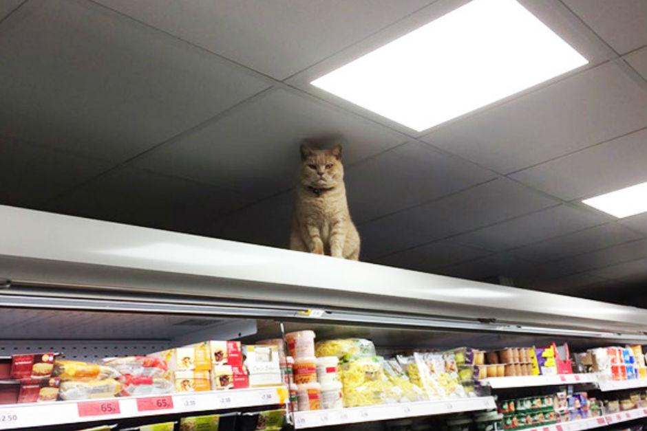supermarkette-yasayan-kedi-one-cikan