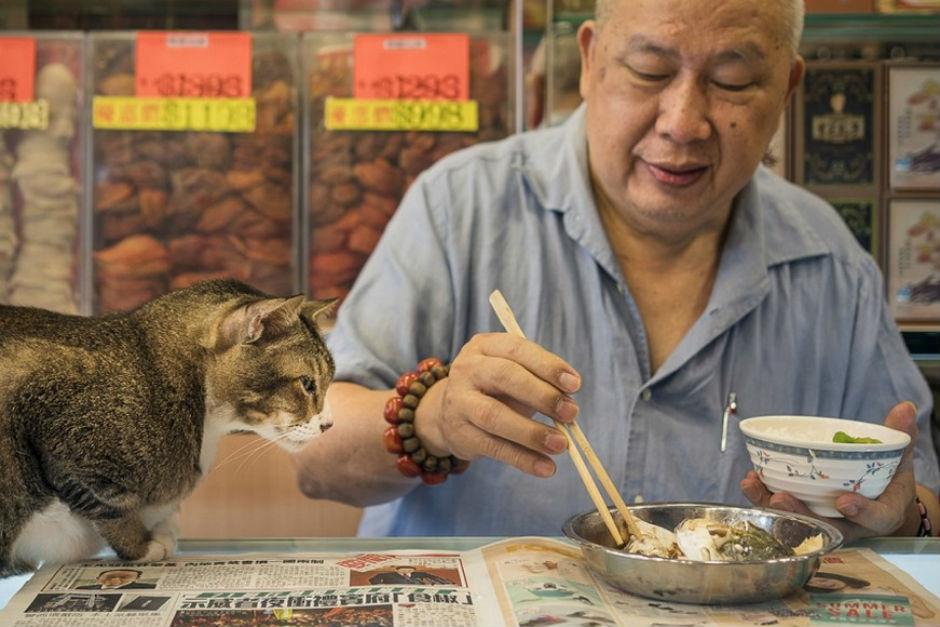 hongkong-kedileri