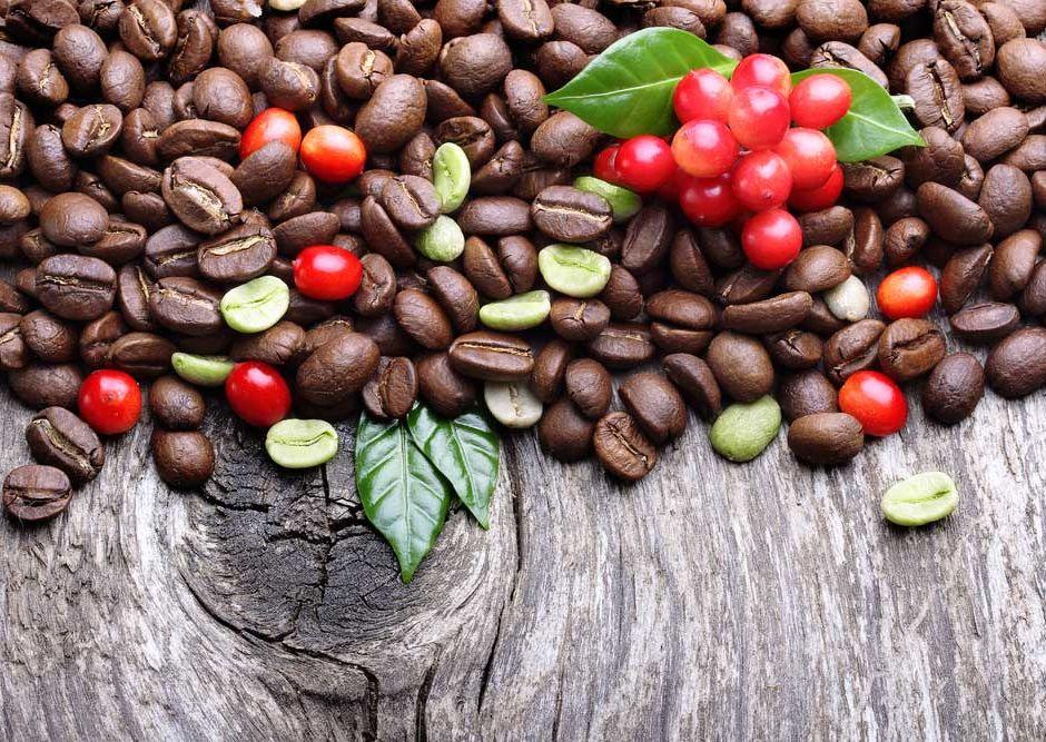 kahve-nasil-toplanir-nasil-islenir--nasil-kavrulur---nasil-demlenir---nasil-ogutulur