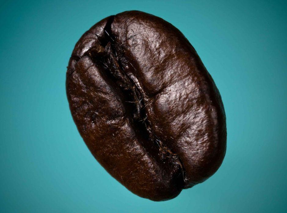 lumberjock - kahvenin kökeni