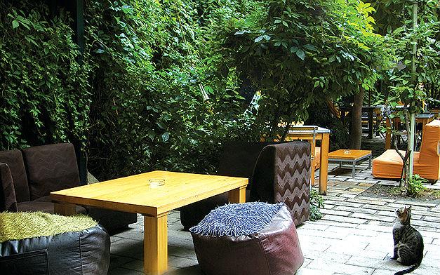 hg2istanbul - limonlu bahçe kedileri