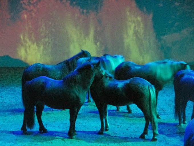İzlanda Atları