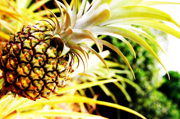 ananas-sinuzit-1-2