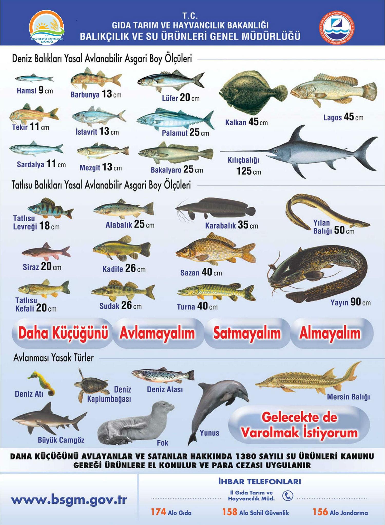 Avlanabilir Asgari Balık Boyları